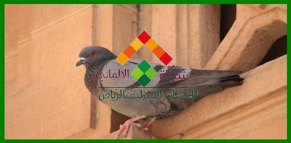شركة مكافحة الحمام غرب الرياض